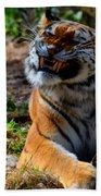 Amur Tiger 6 Hand Towel