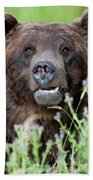 An Old Bear Looking For A Meal Hand Towel by Frank Madia