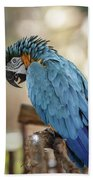 Ara Parrot Bath Towel