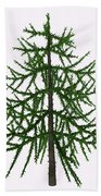Araucaria Sp Tree Bath Towel