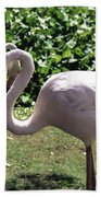 Arizona Flamingos Bath Towel