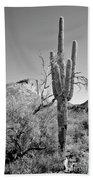 Arizona Saguaro Hand Towel