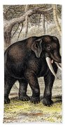 Asiatic Elephant With Young, 19th Bath Towel