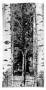 Aspens And The Pine Black And White Fine Art Print Bath Towel