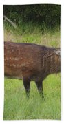 Assateague Sitka Deer Bath Towel