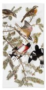 Audubon: Grosbeak Bath Towel