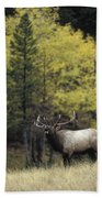Autumn Bull Elk Bugling  Bath Towel