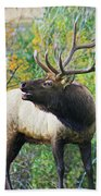 Autumn In Estes Park Bath Towel