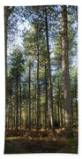 Autumn Tranquil Forest Hand Towel