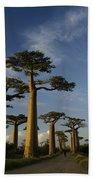 Avenue Des Baobabs Hand Towel