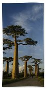 Avenue Des Baobabs Bath Towel