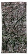 Awash In Cherry Blossoms Bath Towel