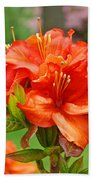 Azaleas Art Home Decor 14 Orange Azalea Flowers Art Prints Greeting Cards Bath Towel