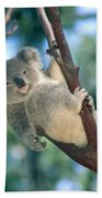 Baby Koala Bear Bath Towel