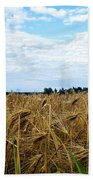 Barley And Sky In Oulu, Finland. Hand Towel