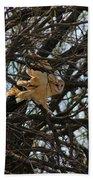 Barn Owl In A Tree Bath Towel