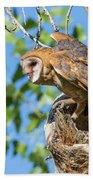 Barn Owl Owlet Climbs Out Of Nest Bath Towel