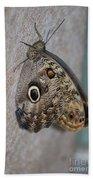 Beautiful Brown Morpho Butterfly Resting In A Butterfly Garden  Bath Towel