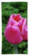 Beautiful Dark Pink Tulip Flower Blossom In A Garden Bath Towel