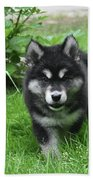Beautiful Face Of An Alusky Puppy Dog In Thick Green Grass Bath Towel