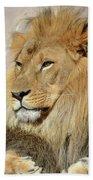 Beautiful Golden African Lion Relaxing In The Sunshine Bath Towel