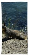 Beautiful Ground Squirrel Standing At The Edge Of The Coast Bath Towel