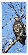 Beautiful Juvenile Eagle Bath Towel