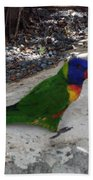 Beautiful Lorikeets Bath Towel