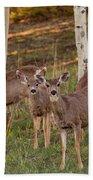 Beautiful Mule Deer Herd Bath Towel