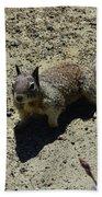 Beautiful Squirrel Standing In A Sandy Area In California Bath Towel