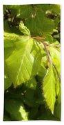 Beech Hedge In Spring Bath Towel