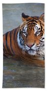 Bengal Tiger Laying Water Hand Towel