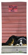 Bernese Mountain Dog Alertly Guarding Home. Bath Towel