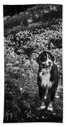 Bernese Mountain Dog Black And White Hand Towel