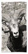 Big Horn Ram Bandw 5 Bath Towel