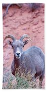 Big Horn Sheep Hand Towel