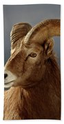Bighorn Sheep In Winter Hand Towel