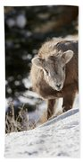 Bighorned Yearling - King Of The Hill Bath Towel