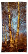 Birch Tree In Golden Hour Bath Towel