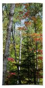 Birches In Fall Forest Bath Towel
