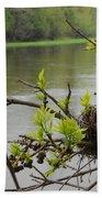 Bird Nest In Ash Tree Branches Bath Towel