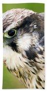 Bird Of Prey Bath Towel