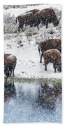 Bison Snow Reflecton Bath Towel