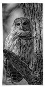 Black And White Barred Owl Bath Towel