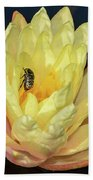 Black And White Beetle On Yellow Pond Lily Bath Towel