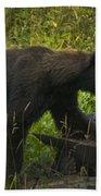 Black Bear-signed-#6549 Bath Towel