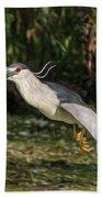 Black-crowned Night Heron In Flight Bath Towel