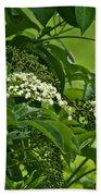 Black Elderberry - Sambucus Nigra_0261black Elderberry - Sambucus Nigra Bath Towel