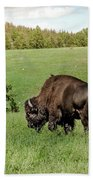 Black Hills Bull Bison Bath Towel