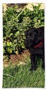 Black Labrador Retriever Puppy Bath Towel